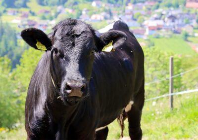 Urlaub am Bio-Bauernhof, Tiere